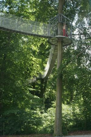 treetopwalking.JPG